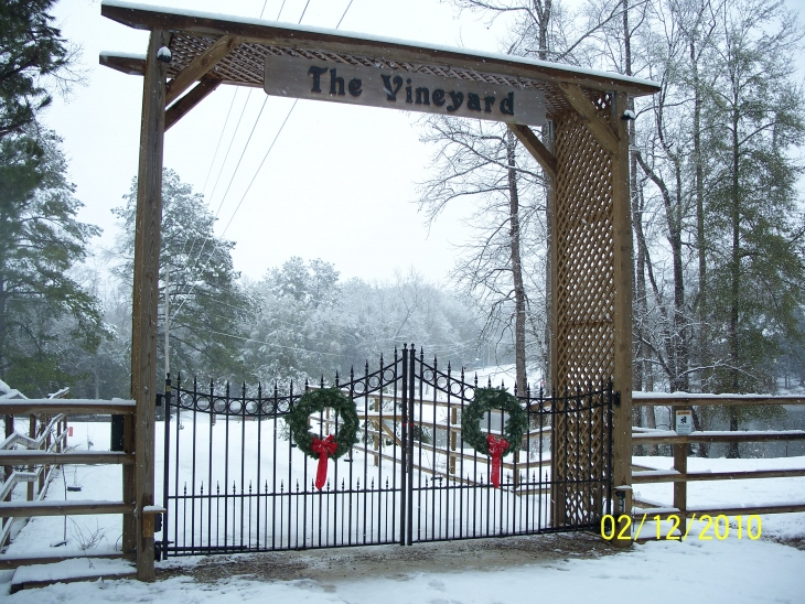 It does occassionally snow at The Vineyard!